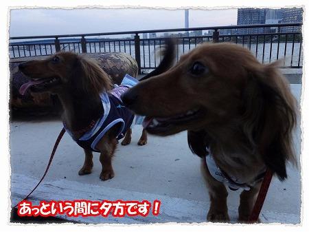 2012_7_29_9.jpg