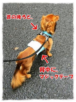 2012_7_2_2_convert_20120702225900.jpg