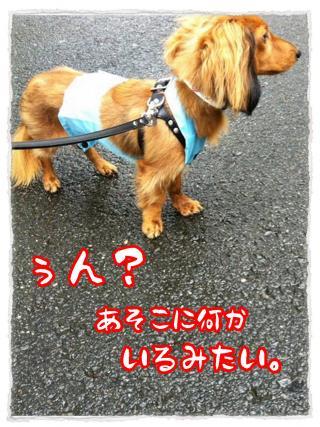 2012_7_2_3_convert_20120702225921.jpg