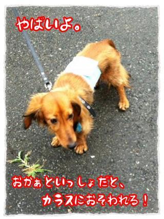 2012_7_2_4_convert_20120702225940.jpg