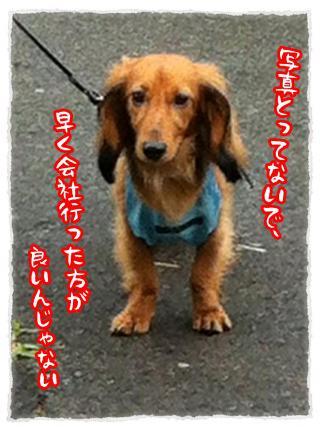 2012_7_2_5_convert_20120702230001.jpg