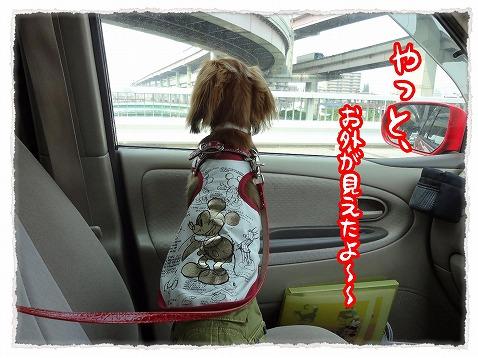 2012_7_30_3.jpg