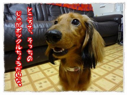 2012_7_31_5.jpg