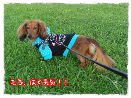2012_7_8_4_convert_20120708233628.jpg