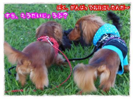 2012_7_8_7_convert_20120708233728.jpg