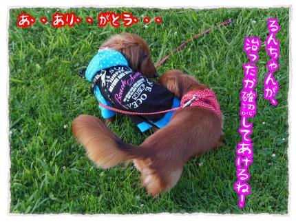 2012_7_8_8_convert_20120708233751.jpg