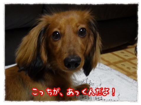 2012_7_9_6_convert_20120709232715.jpg