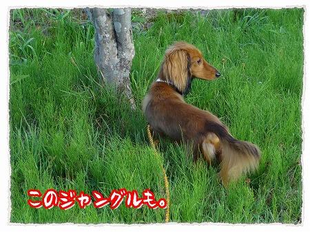 2012_8_13_4.jpg