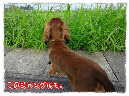 2012_8_13_5.jpg