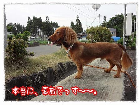 2012_8_13_6.jpg