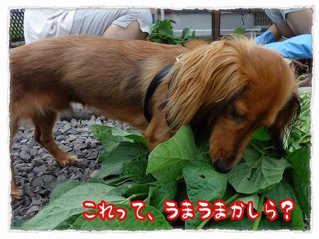 2012_8_14_7.jpg