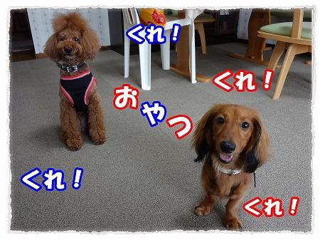 2012_8_14_8.jpg