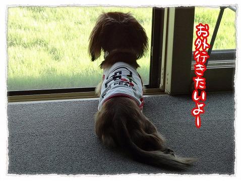 2012_8_17_3.jpg