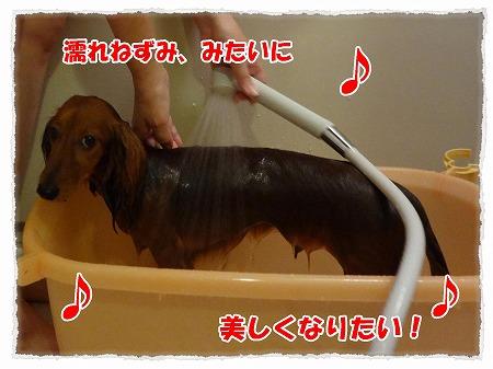 2012_8_1_1.jpg