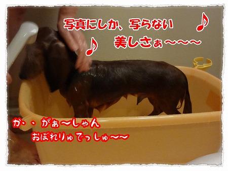 2012_8_1_2.jpg