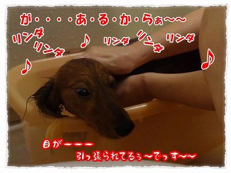 2012_8_1_3.jpg