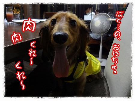 2012_8_1_4.jpg