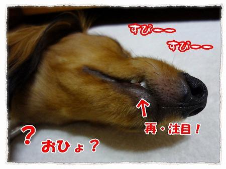 2012_8_1_8.jpg