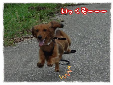 2012_8_21_2.jpg