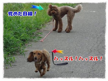 2012_8_21_5.jpg