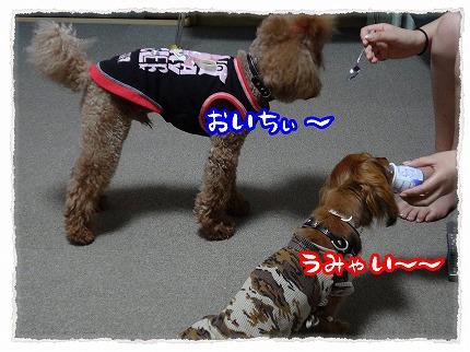 2012_8_23_3.jpg