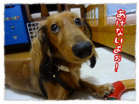 2012_8_26_6.jpg