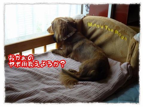 2012_8_31_1.jpg