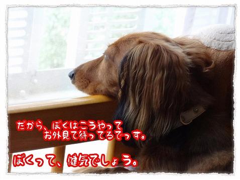 2012_8_31_3.jpg