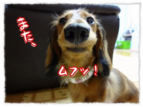 2012_8_8_1.jpg