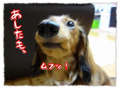 2012_8_8_2.jpg