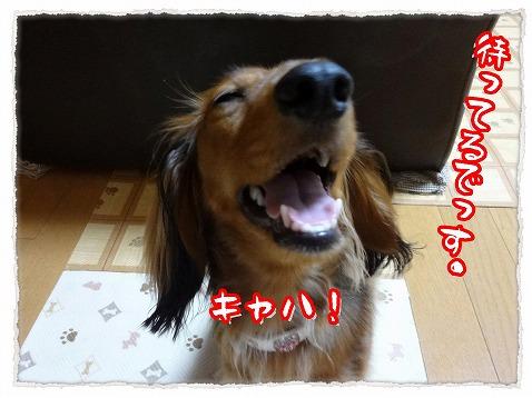 2012_8_8_3.jpg