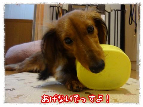 2012_8_9_3.jpg