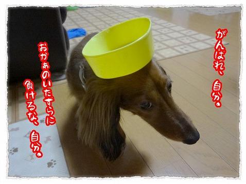 2012_8_9_4.jpg