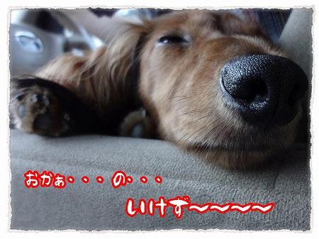 2012_9_11_7.jpg