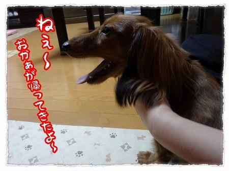2012_9_12_3.jpg