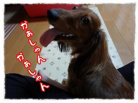 2012_9_12_5.jpg