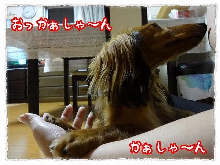 2012_9_12_6.jpg
