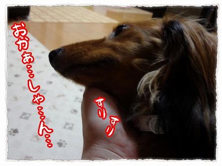 2012_9_12_7.jpg