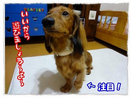 2012_9_13_2.jpg