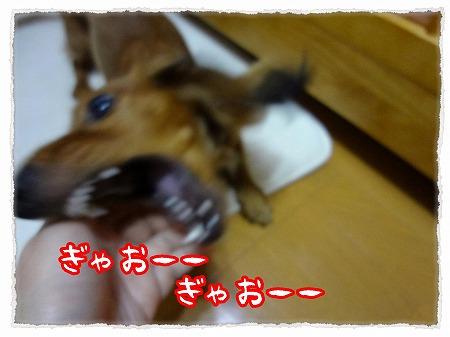 2012_9_13_5.jpg