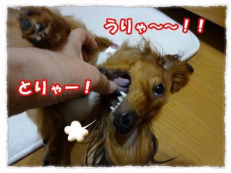 2012_9_13_6.jpg