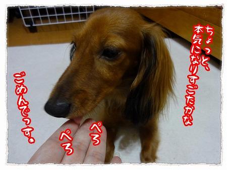 2012_9_13_7.jpg