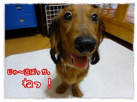 2012_9_13_8.jpg