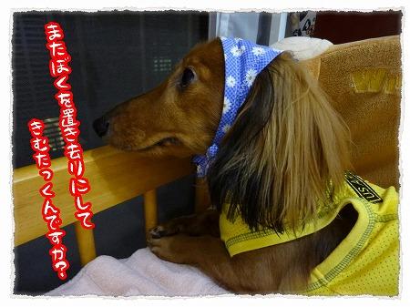 2012_9_16_1.jpg