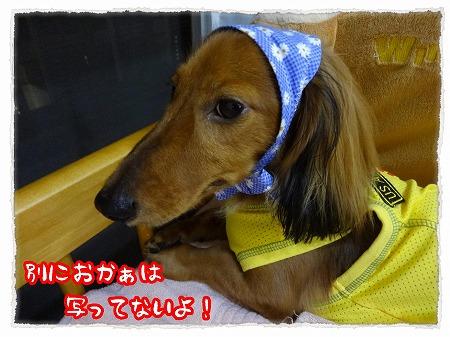 2012_9_16_2.jpg