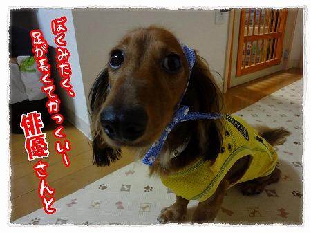 2012_9_16_4.jpg