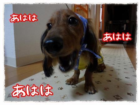 2012_9_16_6.jpg