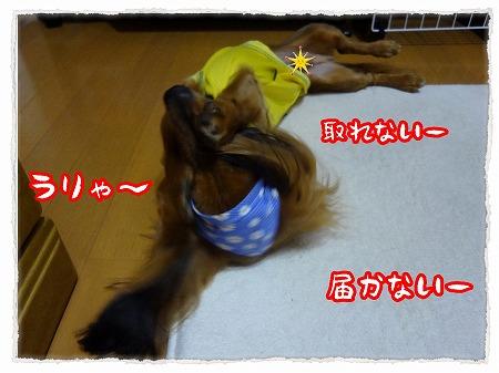 2012_9_16_7.jpg