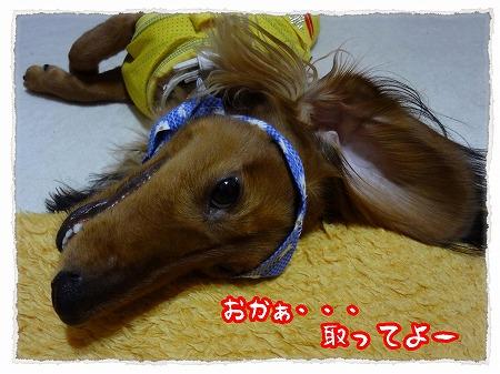 2012_9_16_8.jpg