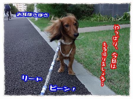 2012_9_18_5.jpg